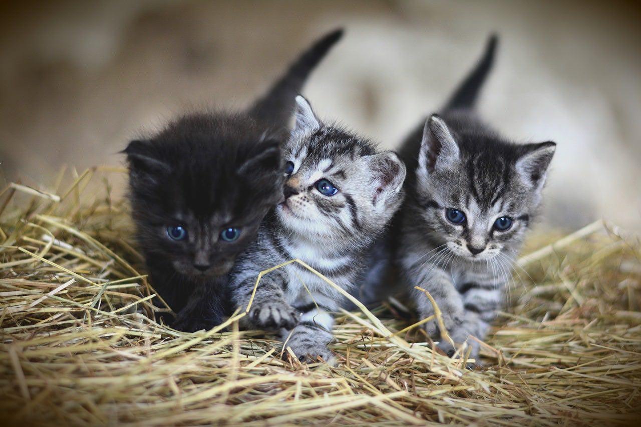Kattenbak